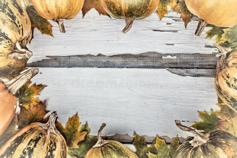 Vue des potirons et des feuilles d'automne Jour d'action de grâces photo libre de droits