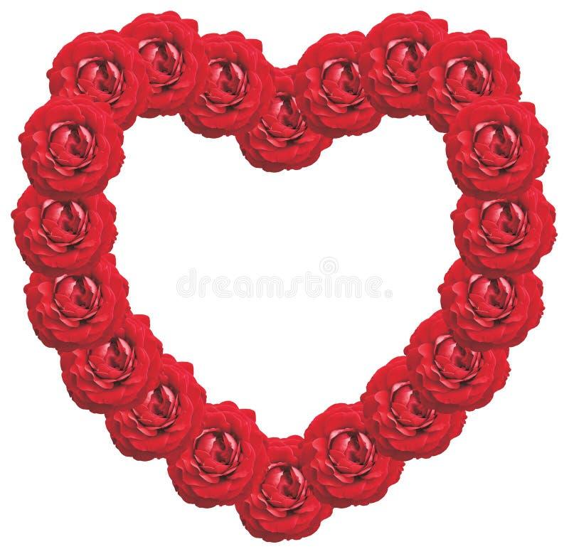 Vue des roses image stock