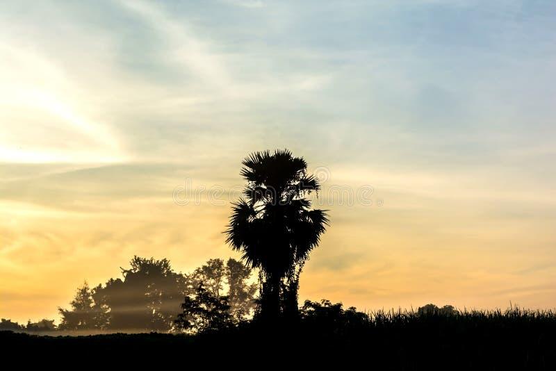 Vue des silhouettes d'arbre pendant le matin photos stock