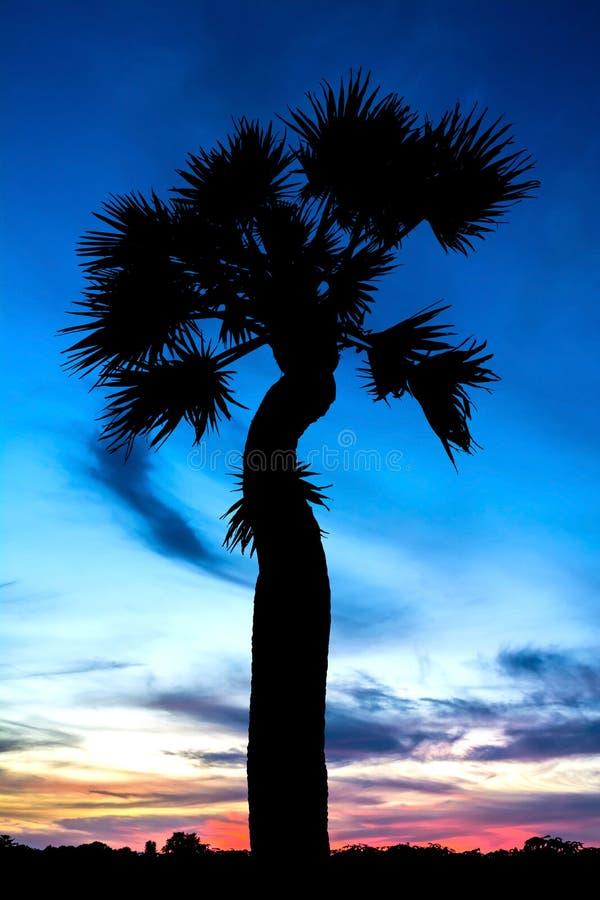 Vue des silhouettes et du ciel de palmier de sucre avec le nuage photo libre de droits