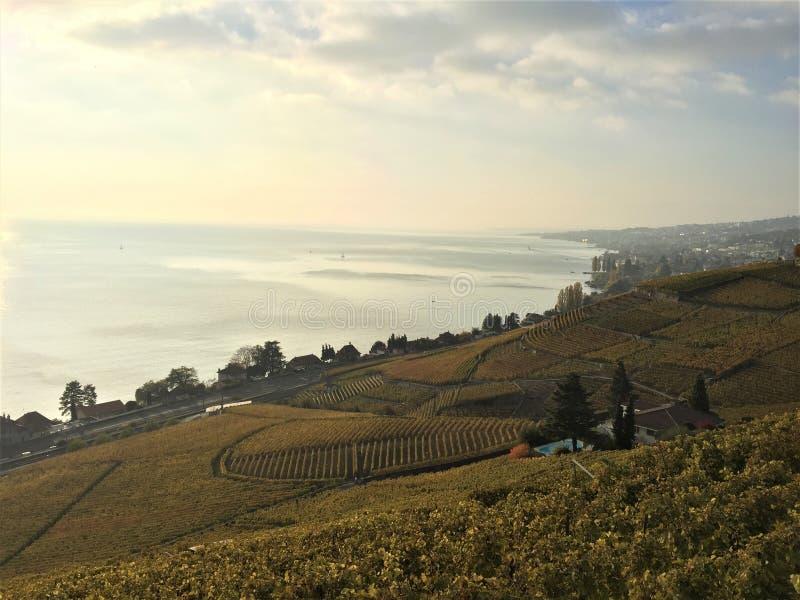 Vue des terrasses de Lavaux, lac Léman, Suisse photos stock
