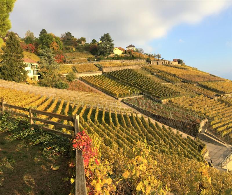 Vue des terrasses de Lavaux, Suisse images libres de droits