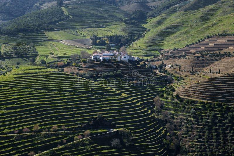 Vue des vignobles en terrasse dans la vall?e de Douro pr?s du village de Pinhao, au Portugal image libre de droits