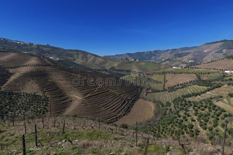 Vue des vignobles en terrasse dans la vall?e de Douro pr?s du village de Pinhao, au Portugal images stock