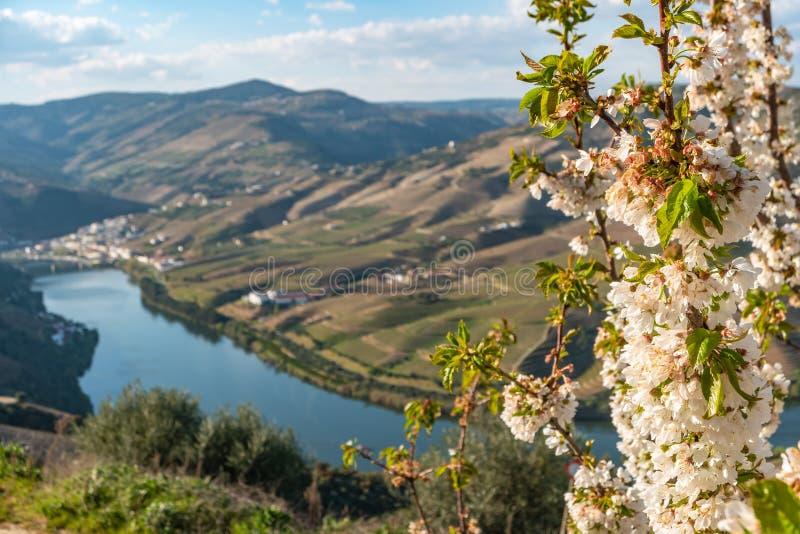 Vue des vignobles en terrasse en vall?e et rivi?re de Douro pr?s du village de Pinhao, Portugal Concept pour le voyage au Portuga image stock
