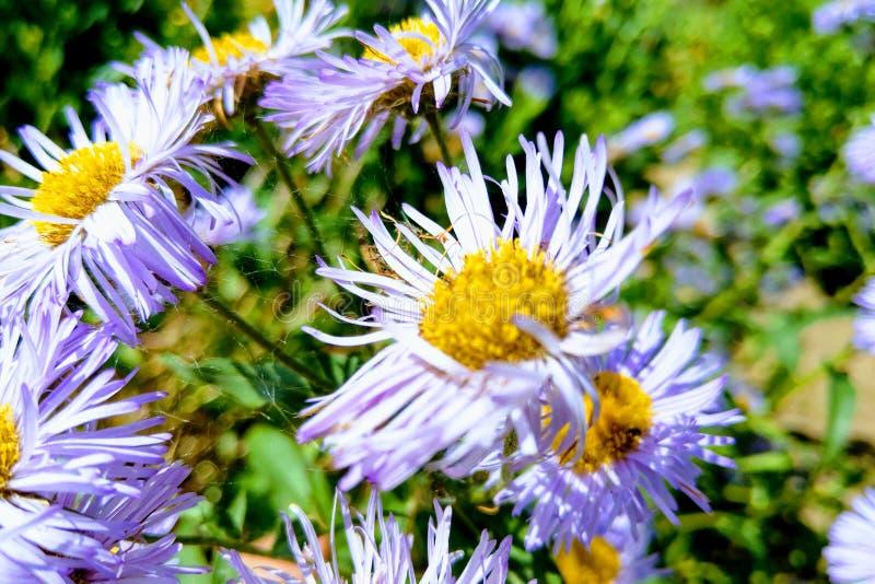 Vue des wildflowers ou des usines lumineux, utilisée pour des buts médicaux, fond de nature images libres de droits