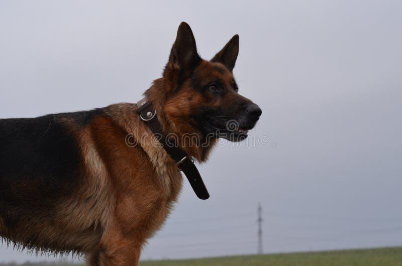 Vue du chasseur photo stock