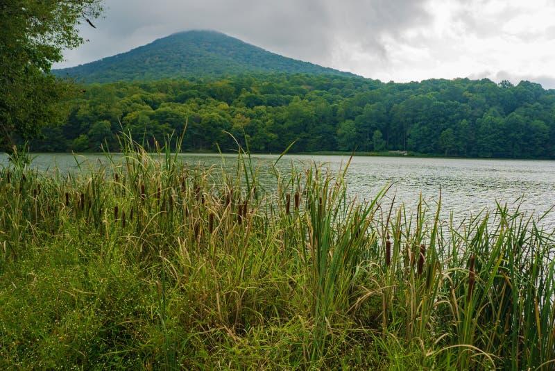 Vue du début de l'automne sur les roseaux par le lac Abbott et la montagne Sharp Top photographie stock