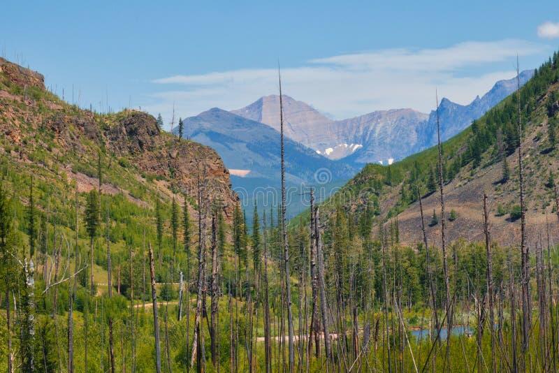Vue du feu de Lodgepole de parc national de glacier photographie stock