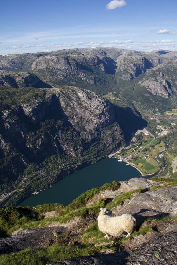 Vue du fjord en Norvège photo libre de droits