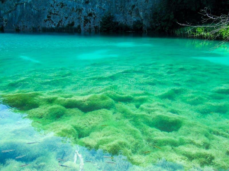 Vue du fond couvert de la mousse et d'algues par l'eau claire d'un lac très propre photographie stock libre de droits