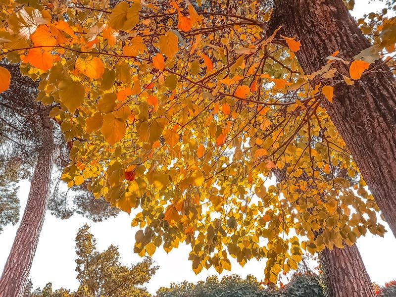 foto de Vue Du Fond Des Arbres Forestiers Et Des Feuilles D'automne Jaunes ...