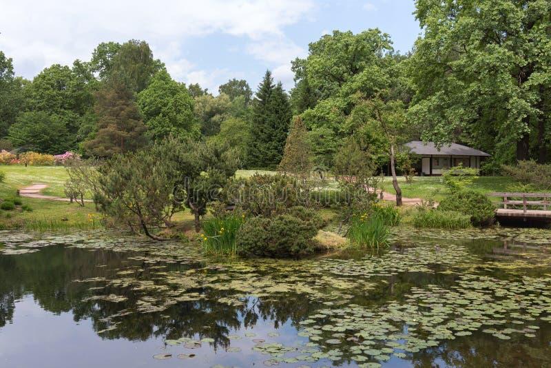 Vue du jardin japonais dans le jardin botanique de ville Composition en paysage avec un ?tang, des arbres et des fleurs photos libres de droits