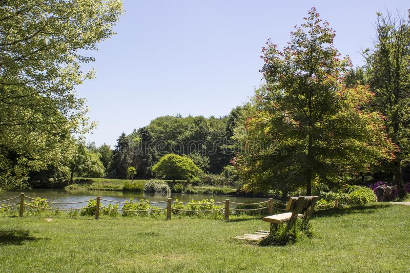 Vue du lac dans la forêt Seat sous l'arbre Le premier printemps a été pris photos libres de droits