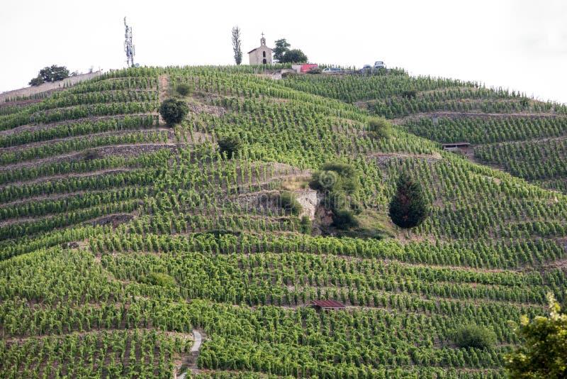 Vue du M Vignobles de Crozes-ermitage de Chapoutier dans Tain l ermitage de `, vallée du Rhône, photos libres de droits