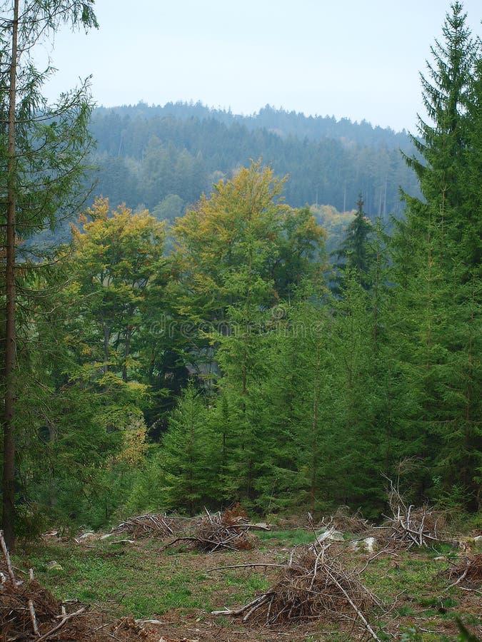 Download Vue du paysage de forêt photo stock. Image du horizontal - 45354338