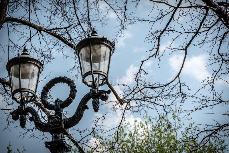 Vue du réverbère en parc sur un fond des arbres et du ciel bleu Fin vers le haut photos libres de droits