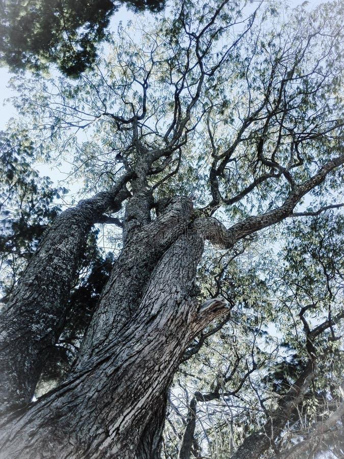 Vue en bas angle de l'arbre par rapport au ciel images libres de droits