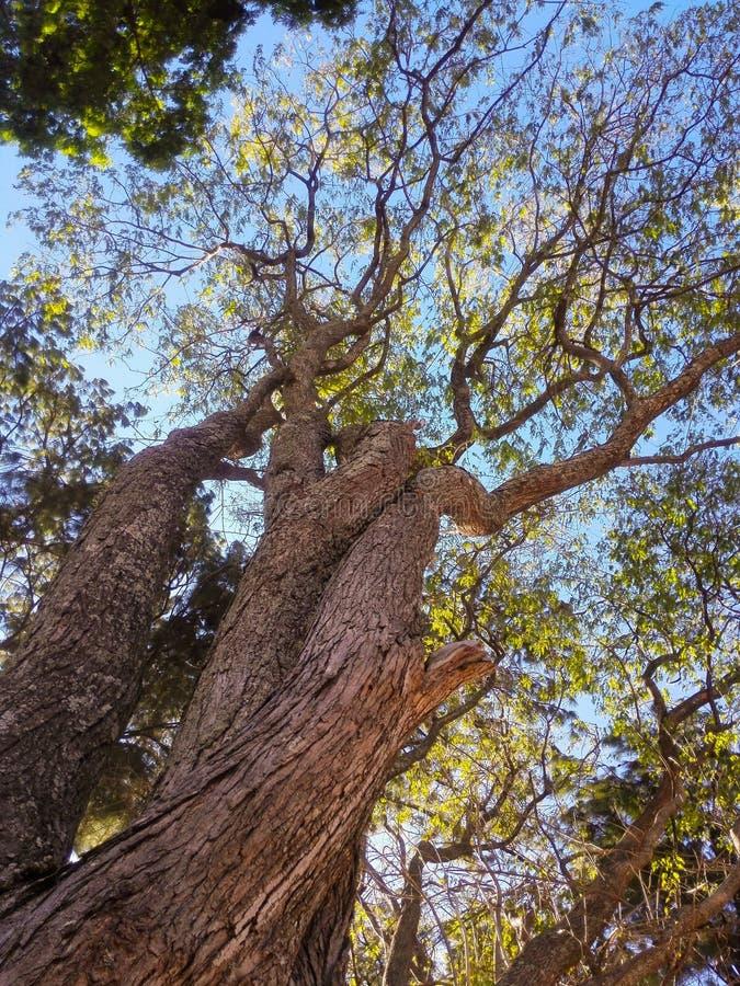 Vue en bas angle de l'arbre par rapport au ciel photographie stock libre de droits
