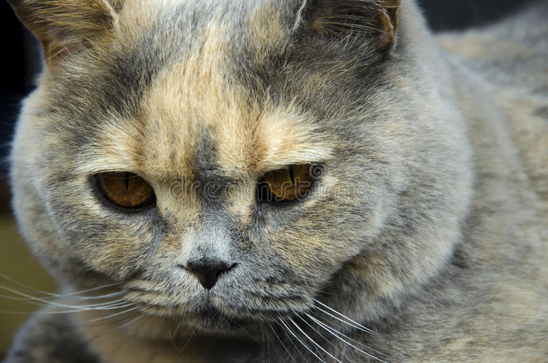 Vue en gros plan de tête de chat image stock