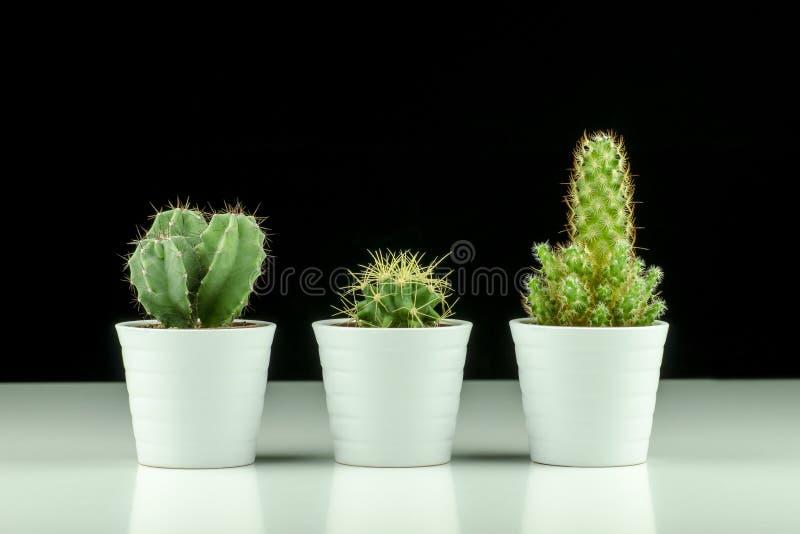 Vue en gros plan de trois cactus dans des pots sur le fond noir photo libre de droits