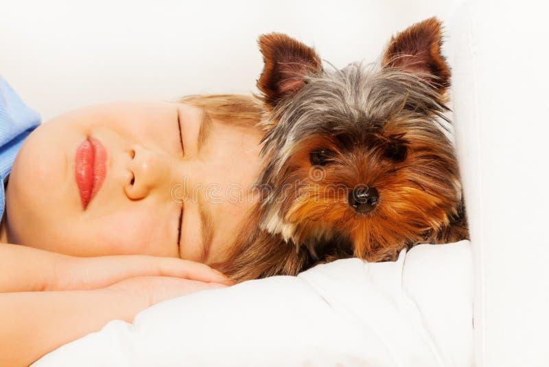 Vue en gros plan de York Terrier avec le garçon de sommeil images libres de droits