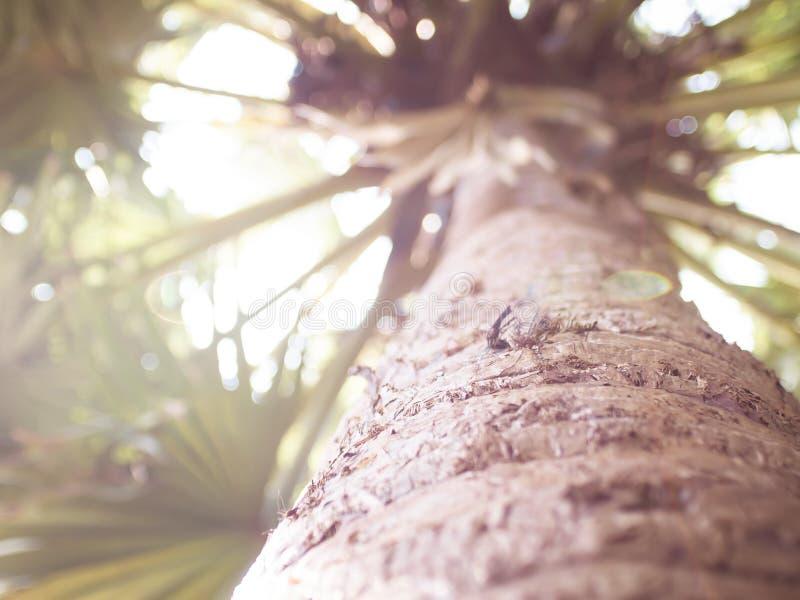 Vue en gros plan inférieure de palmier de grande idée tropicale de concept de vacances de vacances de nature d'arbre de noix de c image libre de droits