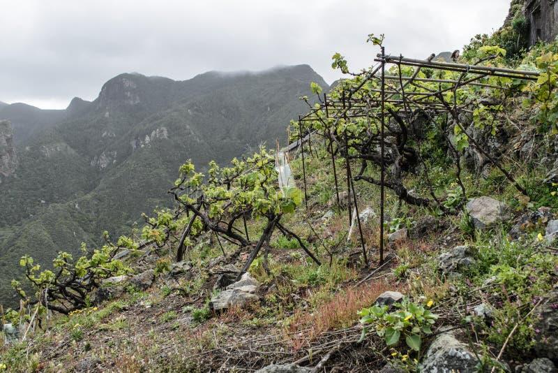 Vue et vignoble de Rocky Landscape près de vilage de Taganana, Ténérife, Îles Canaries photo stock