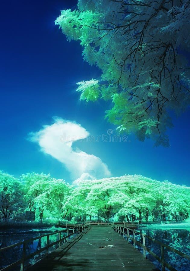 Vue exotique des arbres, du pont, et du ciel de dragon images stock