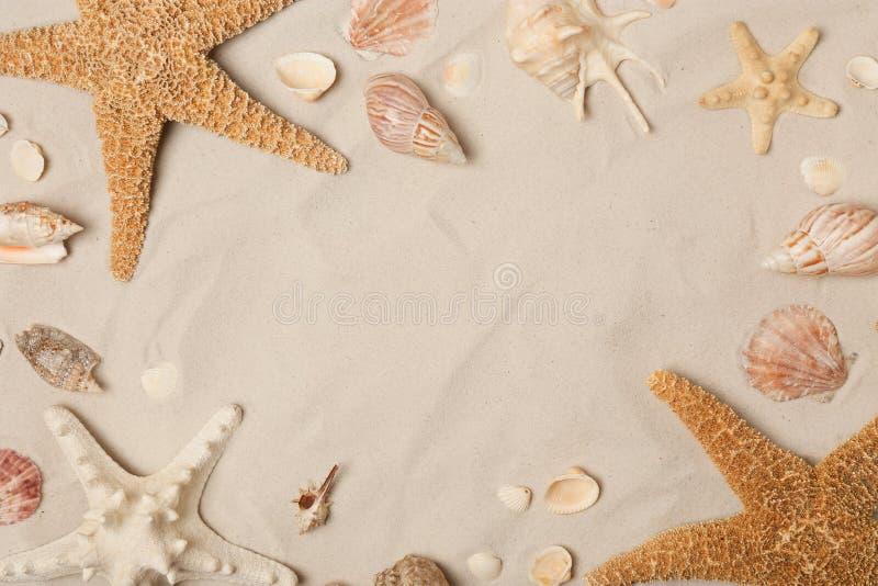 Vue faite de coquillages et étoiles de mer sur le sable de plage, avec l'espace pour le texte images stock