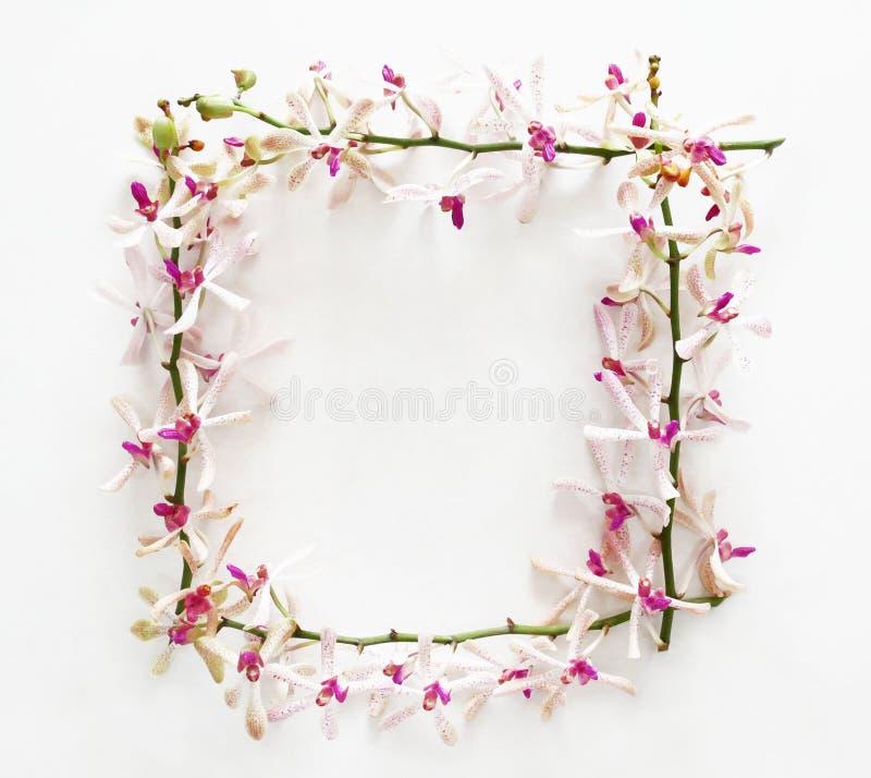Vue faite de fleurs d'orchidée images libres de droits