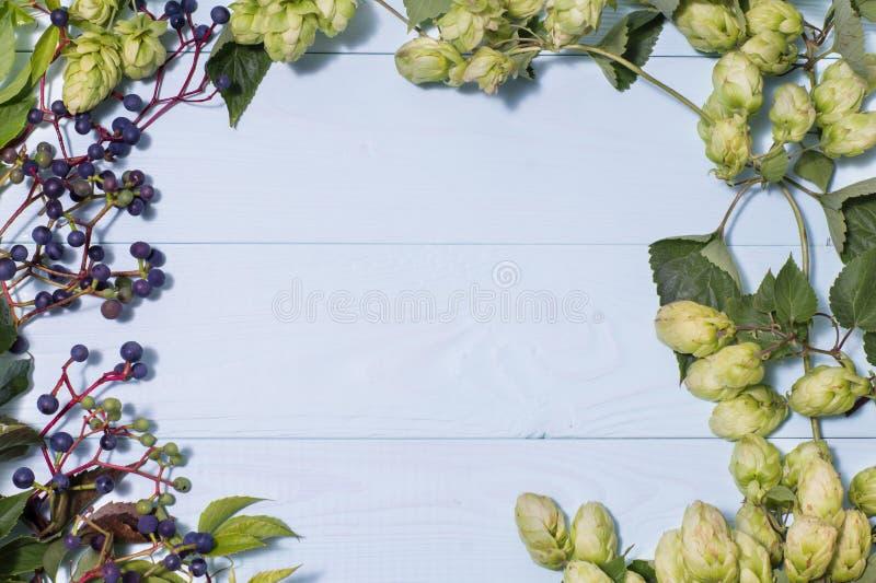 Vue faite de raisins sauvages et houblon verts frais images stock