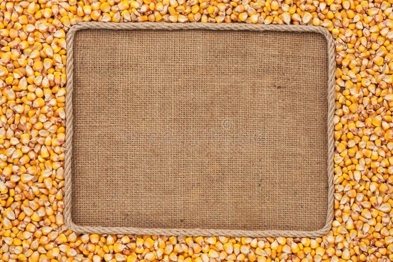 Vue faite en corde avec des grains de maïs sur la toile à sac images stock