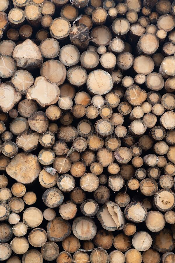 Vue frontale de la grande pile des troncs d'arbre impeccables image libre de droits
