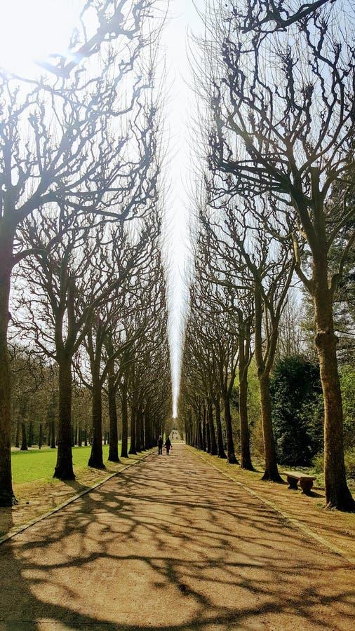 Vue gentille de Parc photos libres de droits