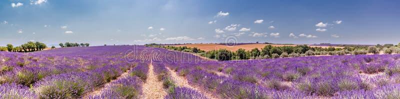 Vue grande-angulaire, panorama avec le ciel bleu et gisement de lavande en France photo stock