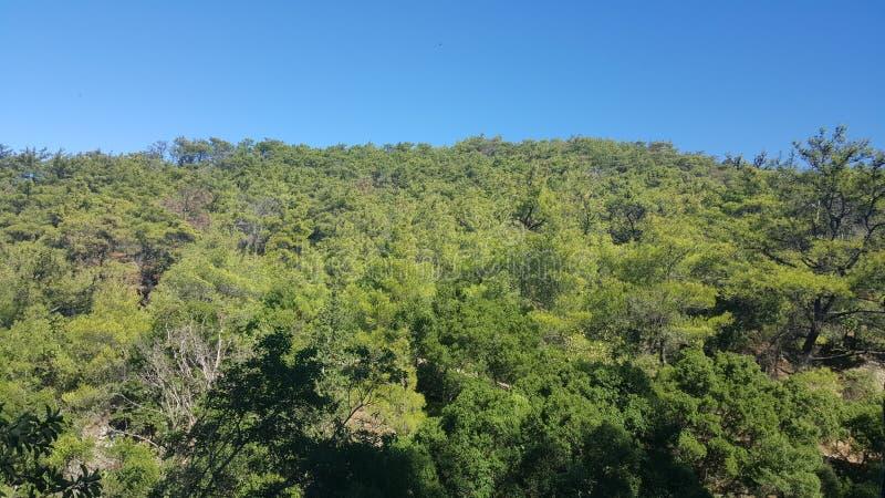 Vue haute élevée de forêt photos stock
