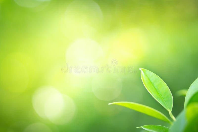 Vue haute étroite de feuille verte dans le jardin sous la lumière du soleil photos libres de droits