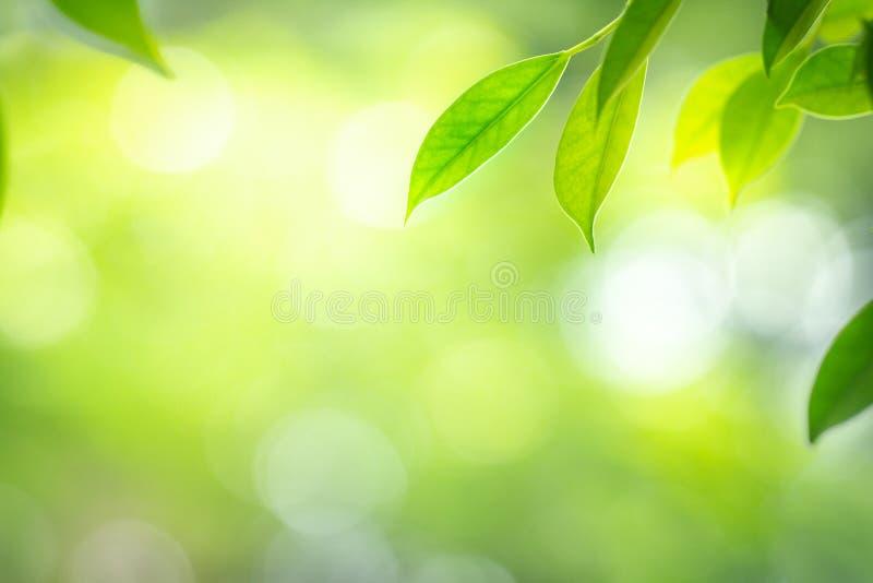 Vue haute étroite de nature des feuilles vertes avec le bokeh de beauté sous la lumière du soleil en été photo libre de droits