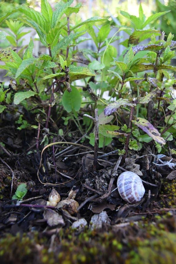 Vue haute étroite des plantes vertes, petits morceaux de roches et bois et une maison d'escargot photographie stock libre de droits
