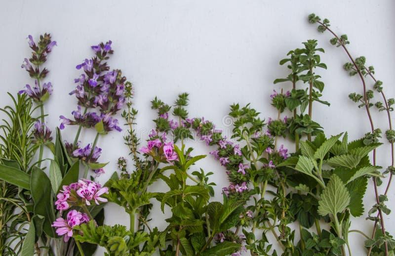 Vue haute étroite du groupe d'herbes fraîches de jardin sur le fond blanc image stock