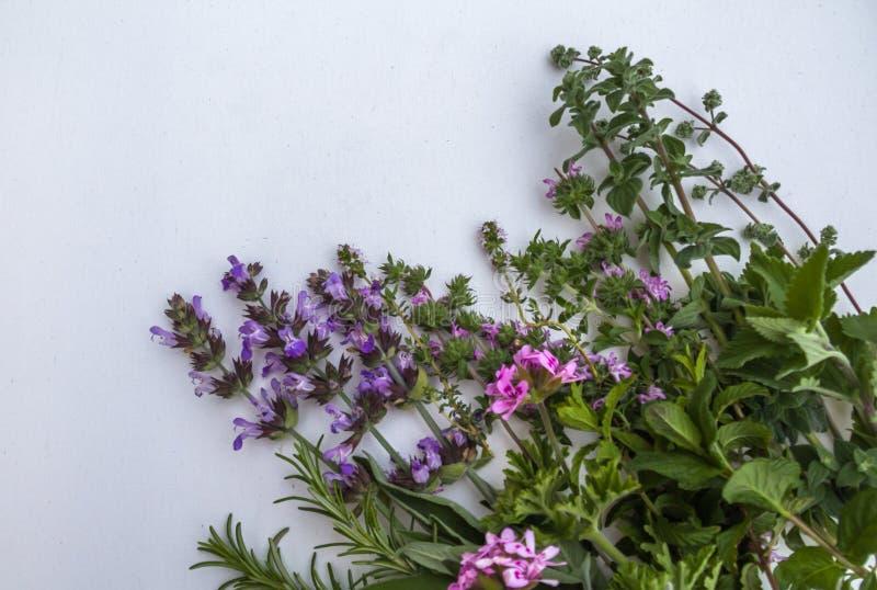 Vue haute étroite du groupe d'herbes fraîches de jardin sur le fond blanc photographie stock