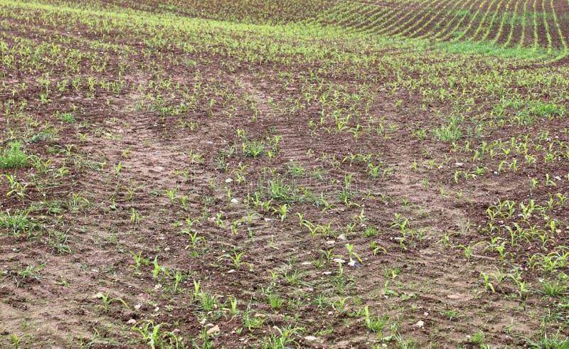 Vue haute étroite sur les champs agricoles avec les voies sèches de la terre et de tracteur images libres de droits