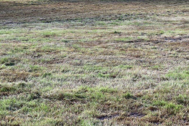 Vue haute étroite sur les champs agricoles avec les voies sèches de la terre et de tracteur photographie stock libre de droits