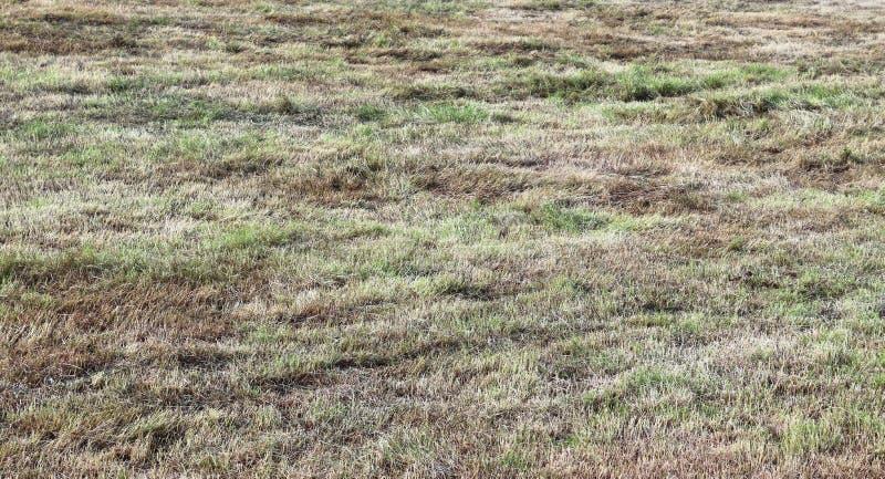 Vue haute étroite sur les champs agricoles avec les voies sèches de la terre et de tracteur photo stock