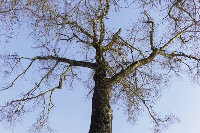 Vue inférieure d'arbre photographie stock libre de droits