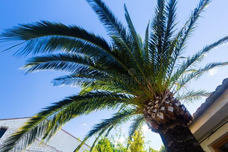 Vue inférieure des branches informes d'un palmier au-dessus d'un toit carrelé contre un ciel bleu un jour d'été photo stock