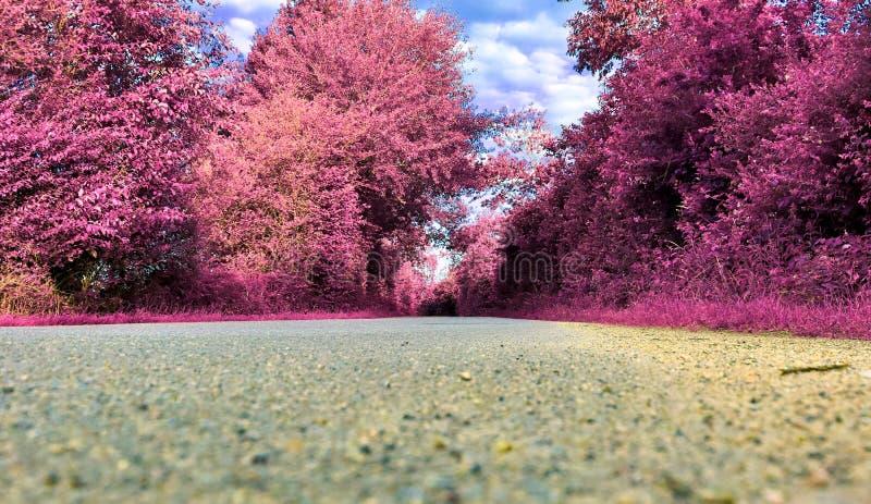 Vue infrarouge de stupéfaction sur des paysages pourpres d'imagination avec quelques routes d'ashpalt image libre de droits