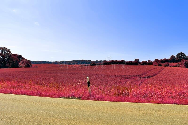 Vue infrarouge de stupéfaction sur des paysages pourpres d'imagination avec quelques routes d'ashpalt image stock