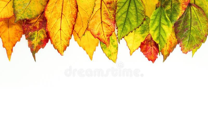 Vue la frontière de belles feuilles d'automne tombées sur le backg blanc image stock